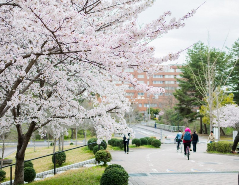 Students at Hiroshima University using bicycles to commute to campus